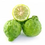 Cytryniec bergamotka