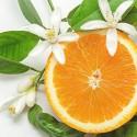 Olejek Neroli z kwiatu pomarańczy
