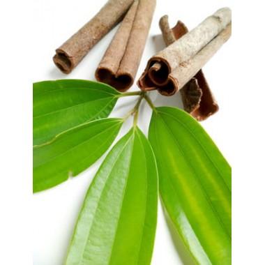 Cynamonowiec liść